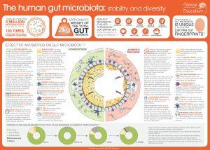 Human Gut Microbiota Infographic