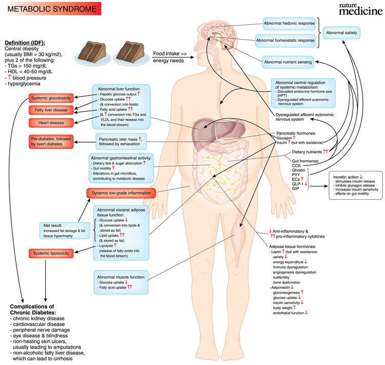 metablic syndrome Metabolic syndrome, sometimes known by other names, is a clustering of at least three of the five following medical conditions: central obesity, high blood pressure, high blood sugar, high serum triglycerides and low high-density lipoprotein (hdl) levels.