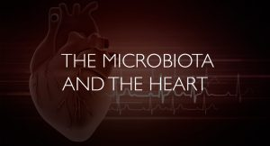 The microbiota and the heart
