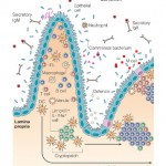 Mucosal Defence
